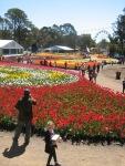 Canberra Floriade 2011.